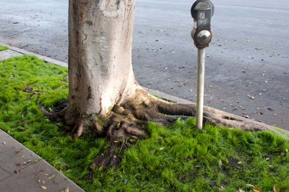 Los Angeles: grassy curb and parking meter