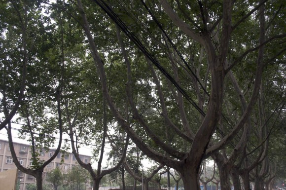 Handan: cable routing through trees
